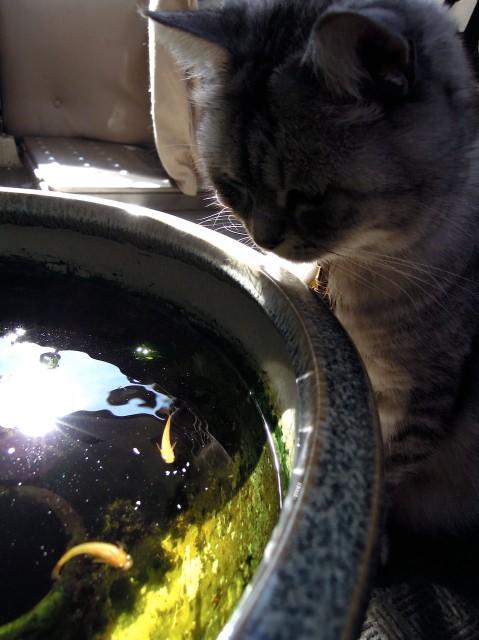 Nikon P300_Summer Cats_1-6.jpg