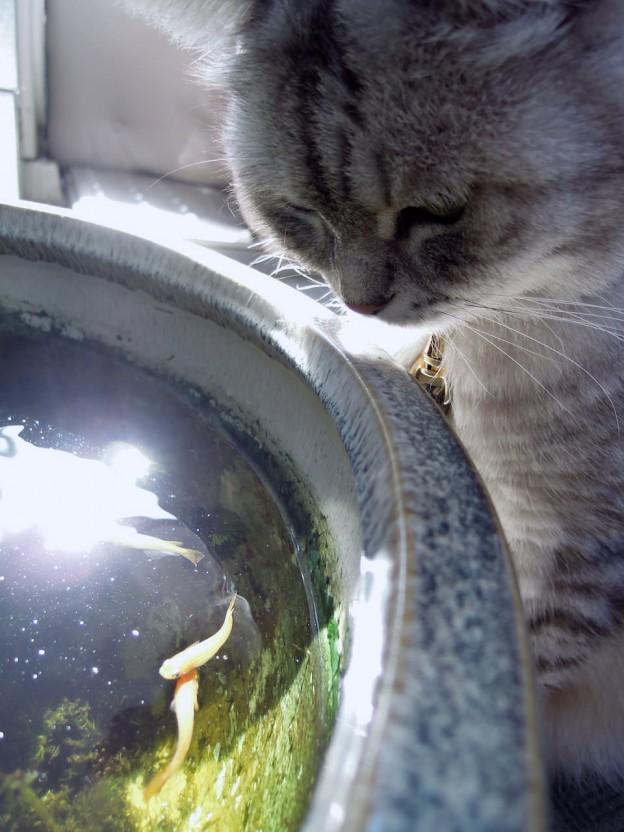 Nikon P300_Summer Cats_1-7.jpg
