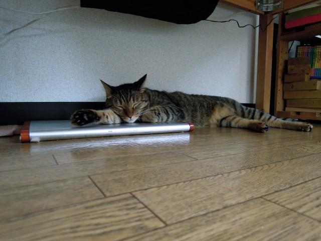 Summer Cats 1 Minute Photo Slideshow-1.jpg