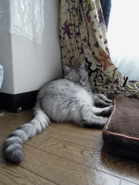 Summer Cats 1 Minute Photo Slideshow-5.jpg