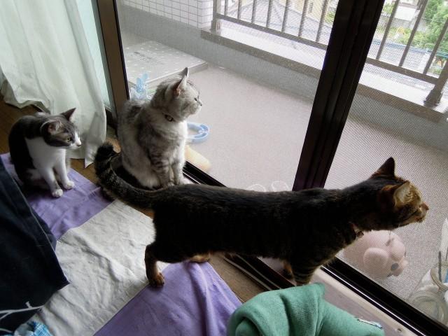 Summer Cats 1 Minute Photo Slideshow-6.jpg