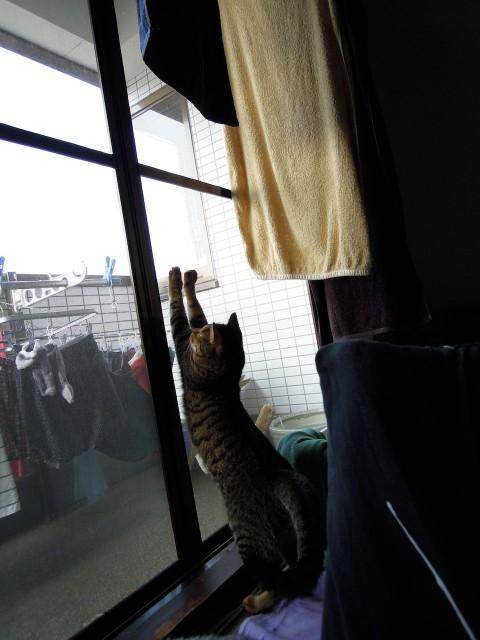 Summer Cats 1 Minute Photo Slideshow-7.jpg