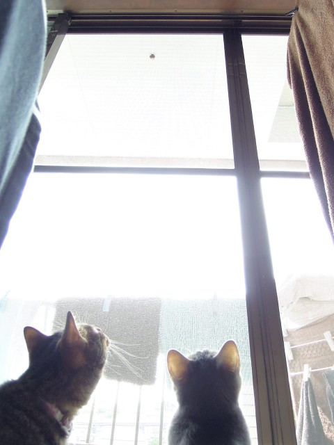 cats and cicada_201308-1.jpg
