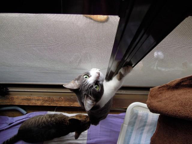 cats and cicada_201308-3.jpg