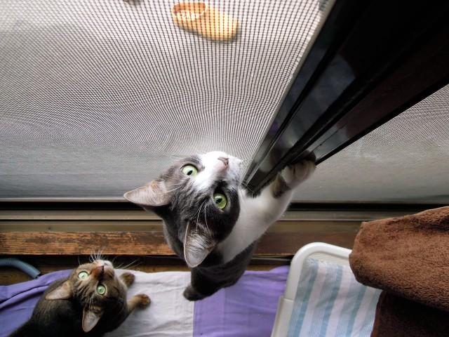 cats and cicada_201308-4.jpg