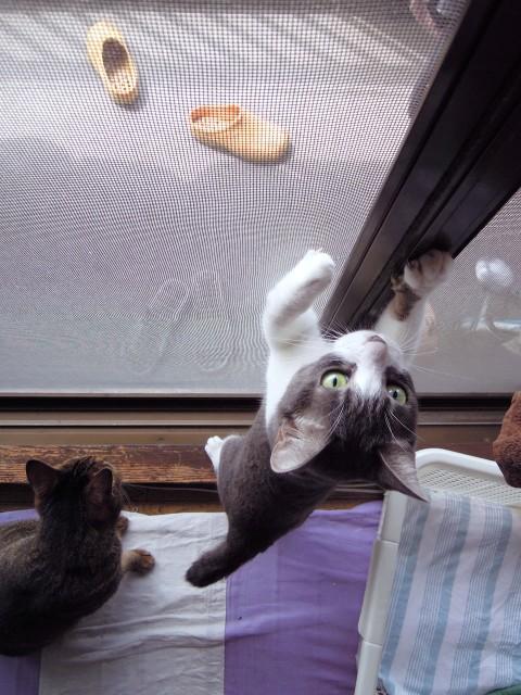 cats and cicada_201308-5.jpg