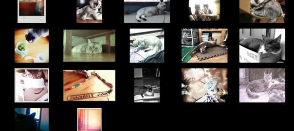 cats photo slideshow 201308.jpg