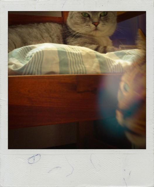 iPad 3rd_cats_20130801.jpg