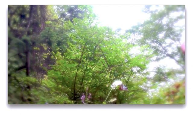 mitsutouge-yama_butterfly1.jpg