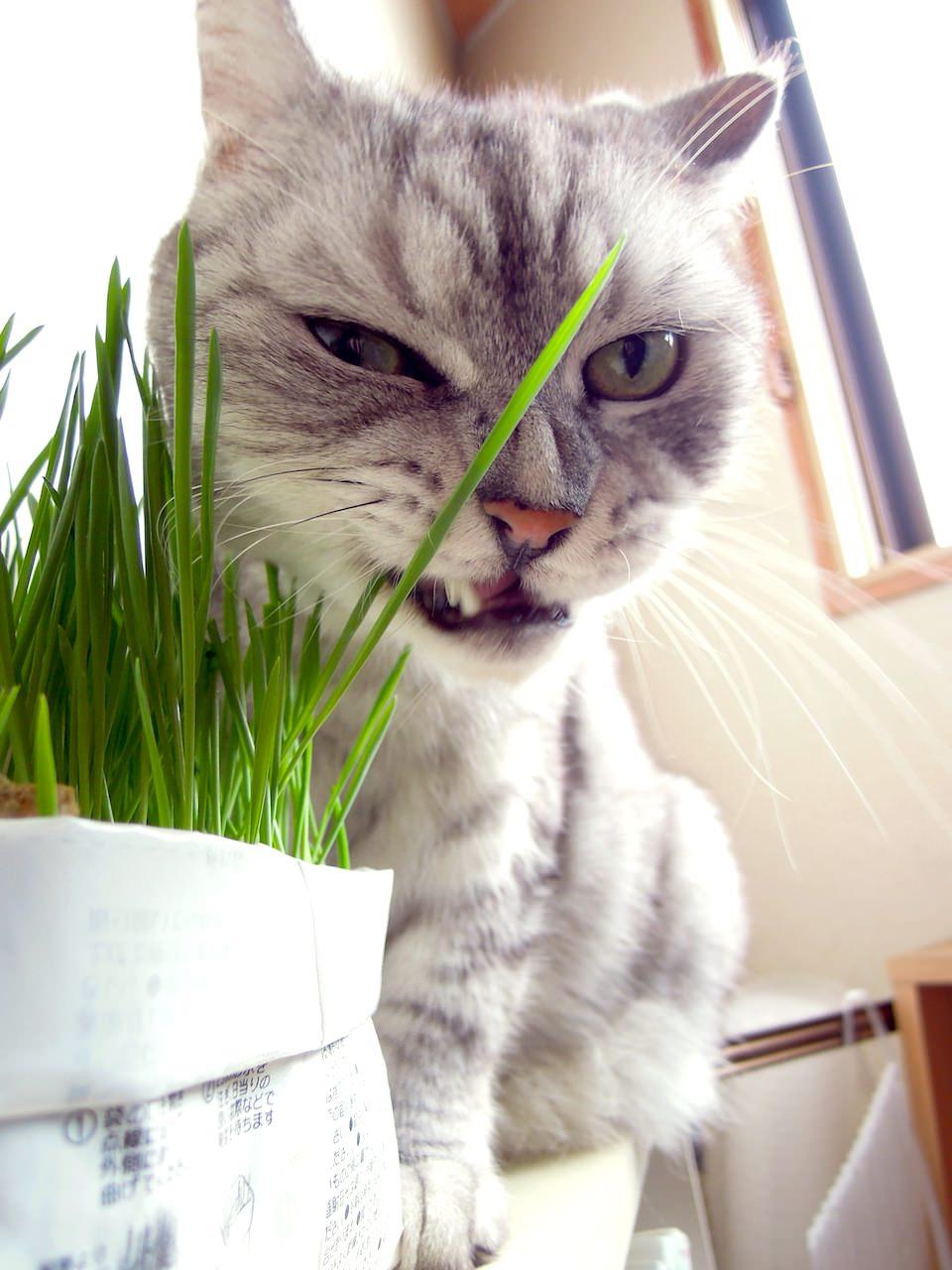 movie_Time Lapse Cat Grass Observation-13-2.jpg