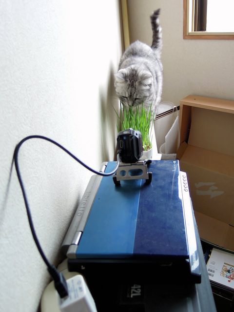 movie_Time Lapse Cat Grass Observation-2-2.jpg