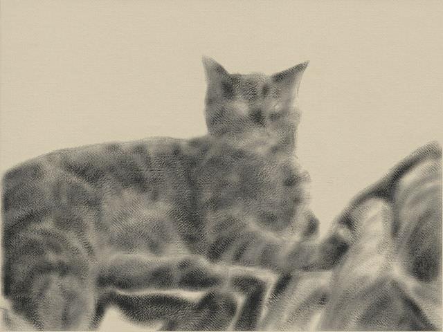 Nintendo 3DS LL_Cat Sketch_20131029.jpg