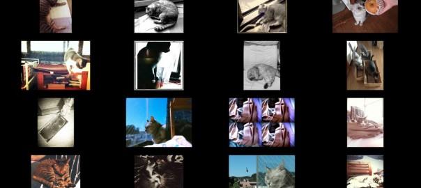 猫ら写真まとめ Twitter@necobitter 2013/09