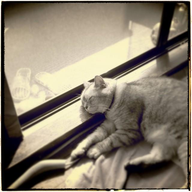 iPad 3rd_cats_20130907_1280.jpg