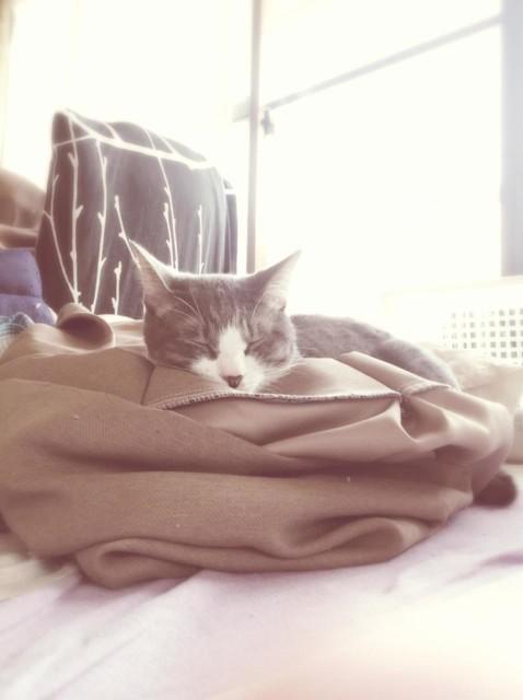 iPad 3rd_cats_20130921-2_1280.jpg