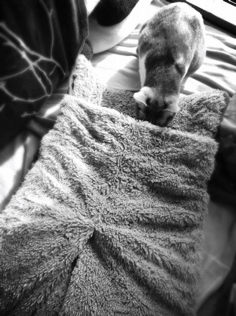 Alter Cat Bet-5.jpg
