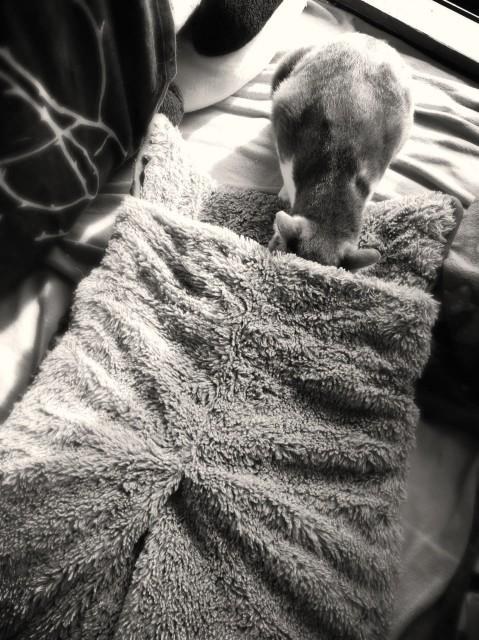 Alter Cat Bet-6.jpg