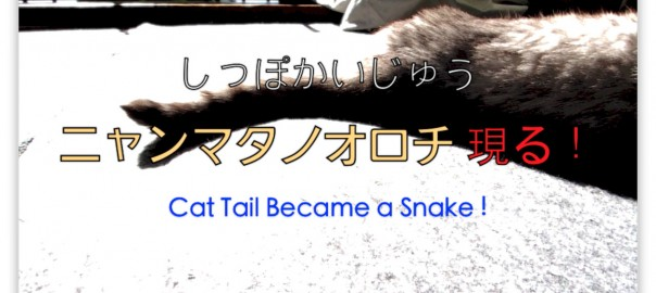 Cat tail became a snake.jpg