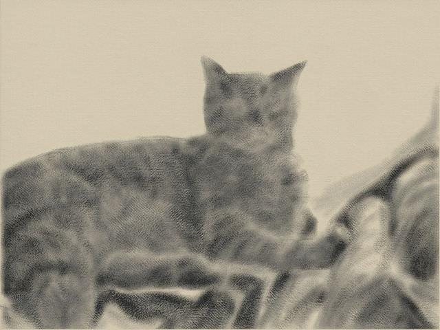 Nintendo 3DS LL_Cat Sketch_20131102.jpg
