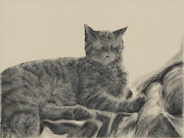Nintendo 3DS LL_Cat Sketch_20131119.jpg