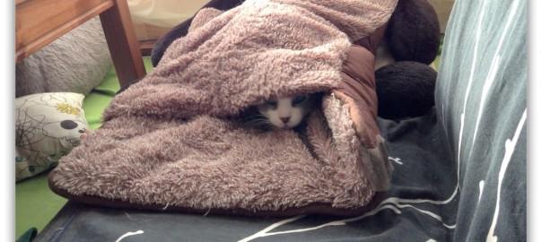 Cat Wakes Up-1.jpg