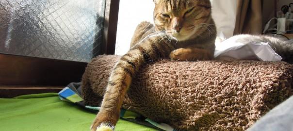 Indecisive cat-2.jpg