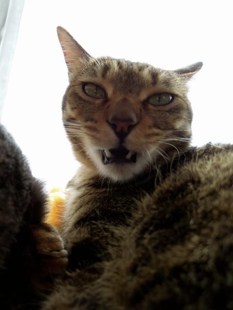 Nikon P300_Slightly Funny Cats-1.jpg