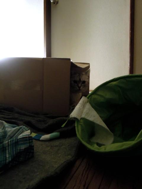 Nikon P300_Slightly Funny Cats-11.jpg