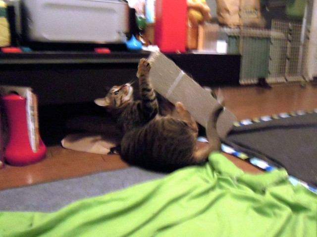 Nikon P300_Slightly Funny Cats-2.jpg