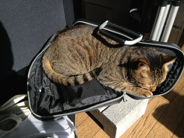 cats_20131111-2.jpg
