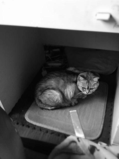 cats_20131125-2.jpg