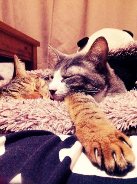 cats_20131125.jpg
