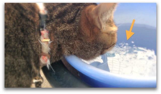 Cat Licking the Frozen Water in the Bucket-1.jpg