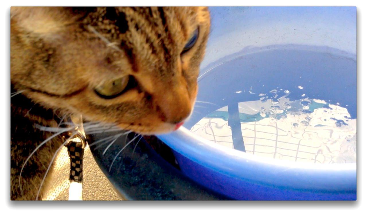 Cat Licking the Frozen Water in the Bucket-2.jpg