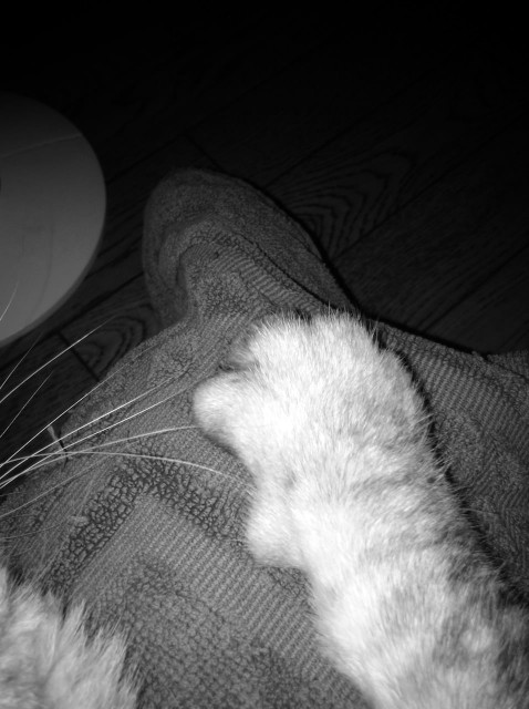 iPod touch 5_cats_20131204.jpg