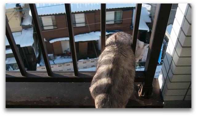 OLYMPUS XZ-2_snow and cat-2.jpg
