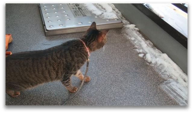 OLYMPUS XZ-2_snow and cat-3.jpg