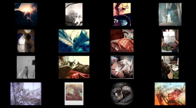cats-photos_201401.jpg