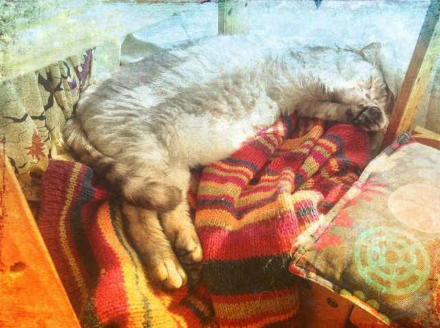 cats_20140131.jpg