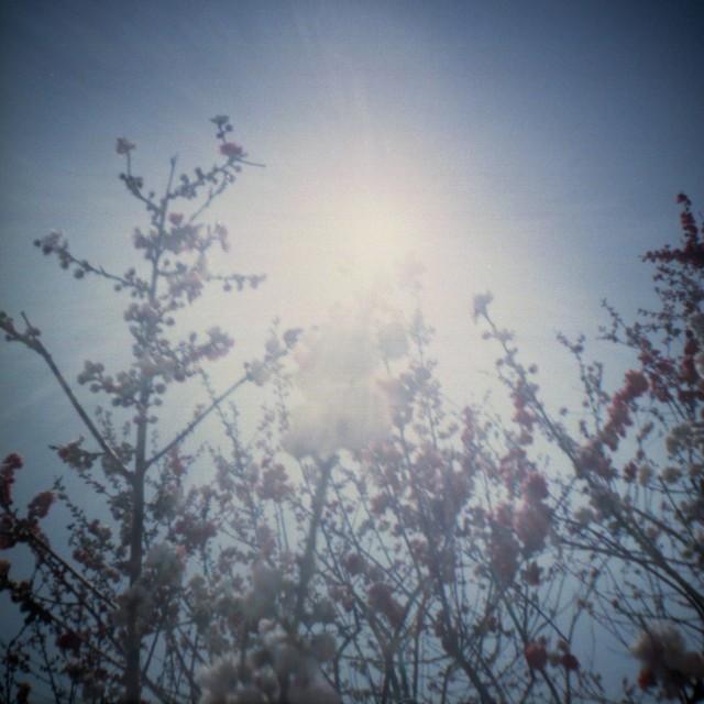 yamanashi2012spring-4.jpg