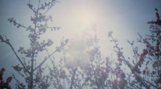 山梨のおいしそうな春 2012 その3(Lomo Diana Mini)