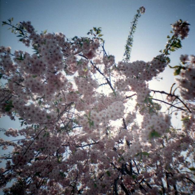 yamanashi2012spring-8.jpg