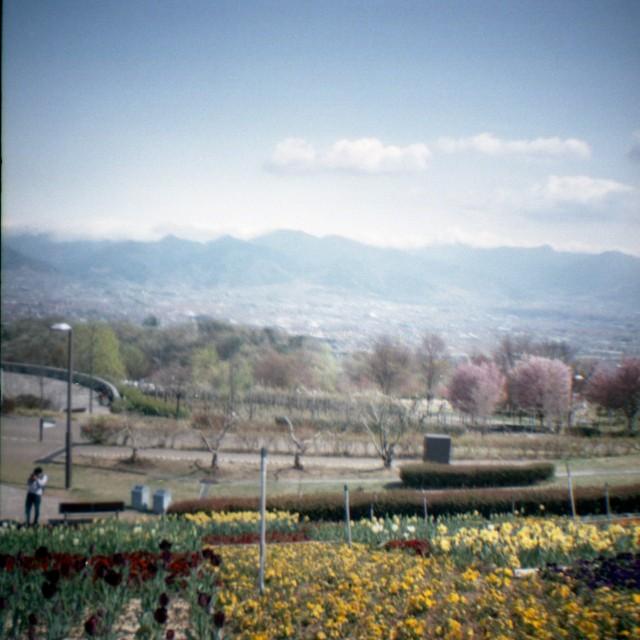 yamanashi2012spring1-1.jpg
