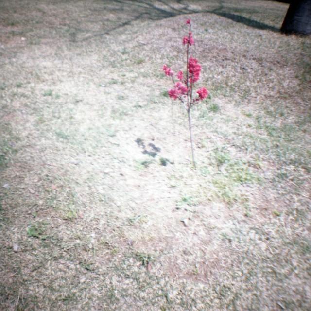 yamanashi2012spring1-3.jpg