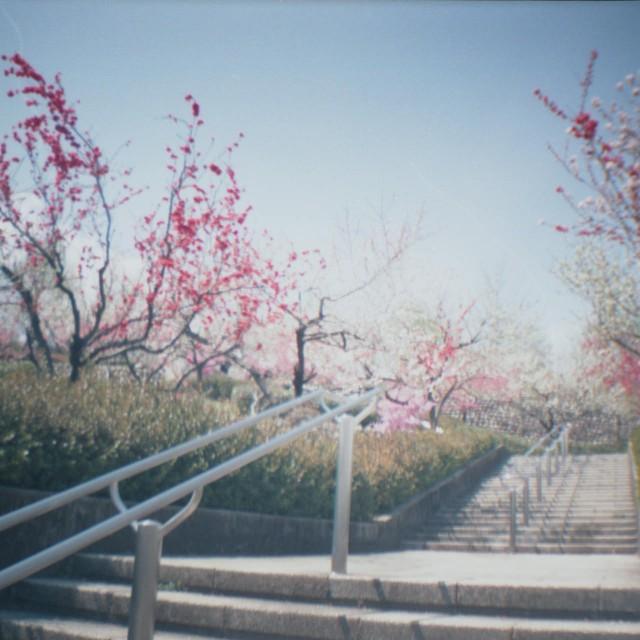 yamanashi2012spring1-4.jpg