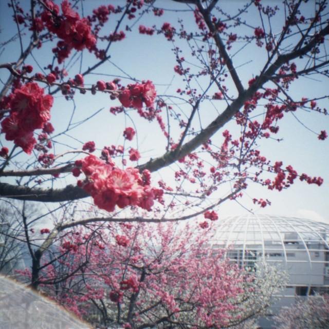 yamanashi2012spring1-5.jpg