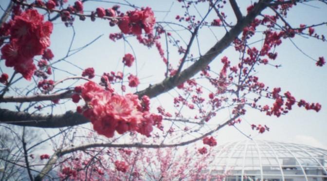 山梨のおいしそうな春 2012 その1(Lomo Diana mini)