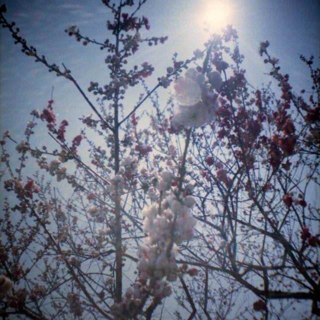 yamanashi2012spring1-6.jpg