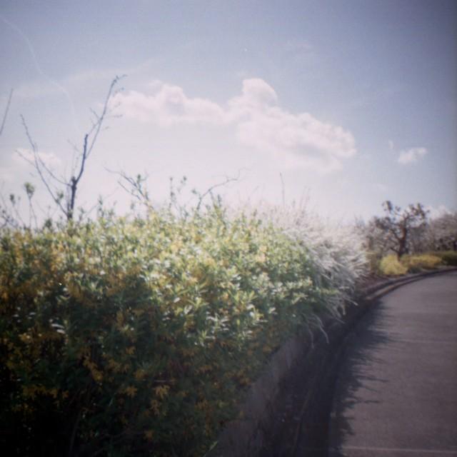 yamanashi2012spring1-7.jpg