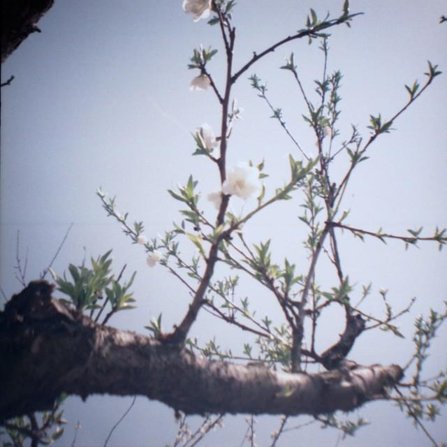 yamanashi2012spring2-4.jpg